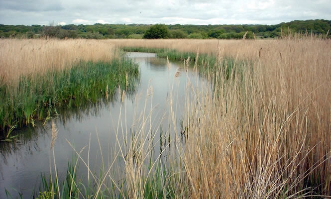 Filsham Reedbed Local Nature Reserve