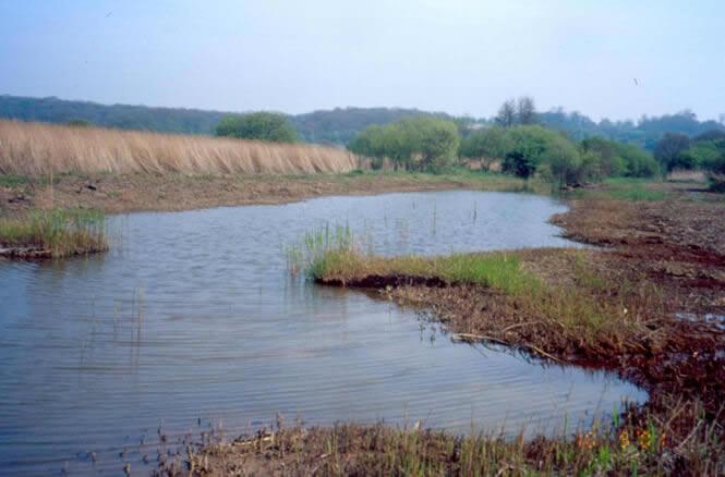 Renovating ditches at Filsham Reddbeds Local Nature Reserve