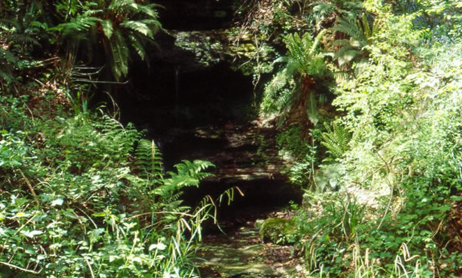 Gill stream at Old Roar Gill Local Natuire Reserve Alexandra Park