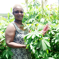 Image of farmer in Sierra Leone with plants